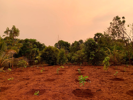 Tree planting, Phase 2, April 2020