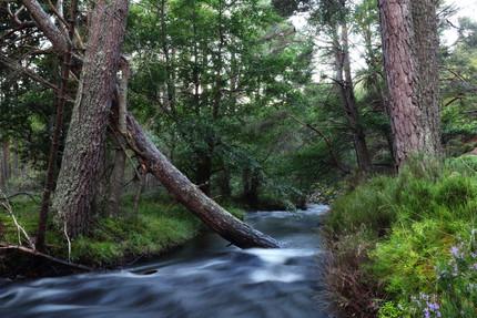stream flowing.jpg