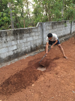 Phase 1 planting