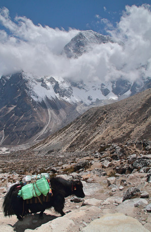 Yak and mountain.jpg