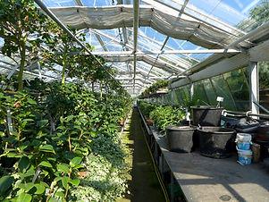 greenhouse-2499758_1920.jpg