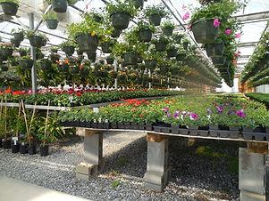 flowers-732762_1920.jpg
