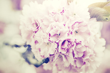 flowers-bouquet-1031266_1920.jpg