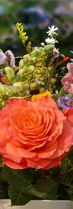 flowers-2719357_1920.jpg