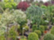 nursery-373038_1280.jpg