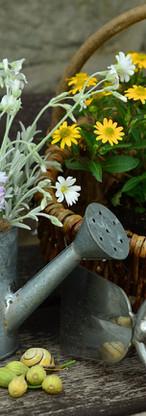 flowers-779317_1920.jpg
