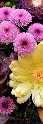 flowers-2900085_1920.jpg