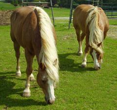 punxsutawney horses2.jpg
