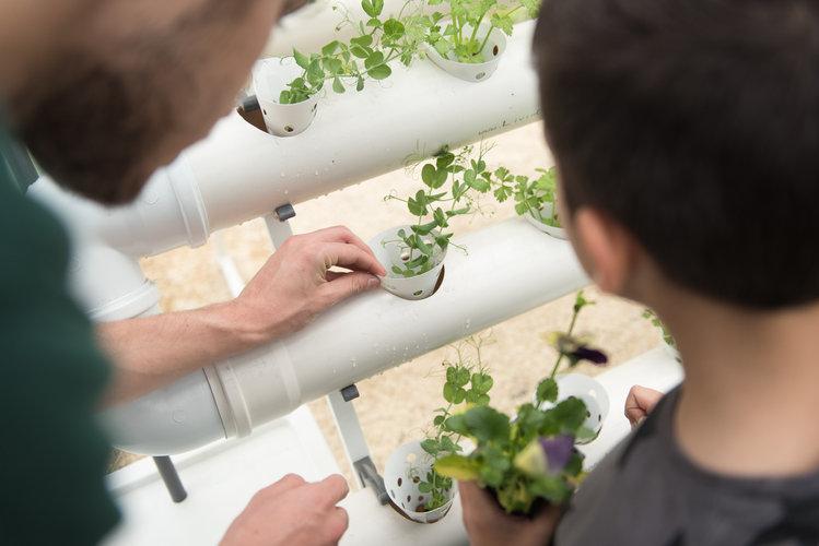 לימודי חקלאות עירונית
