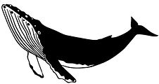 vector-illustration-hand-drawn-humpback-
