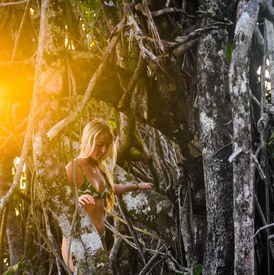 The Jaguars Jungle Biological Station
