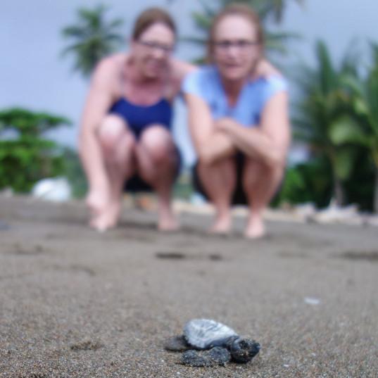 Releasing baby sea turtles in Progreso