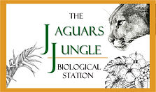 the jaguars jungle biological station