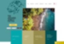 the jaguars jungle web design.jpg