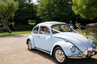 White Wedding Car Beetle.JPG
