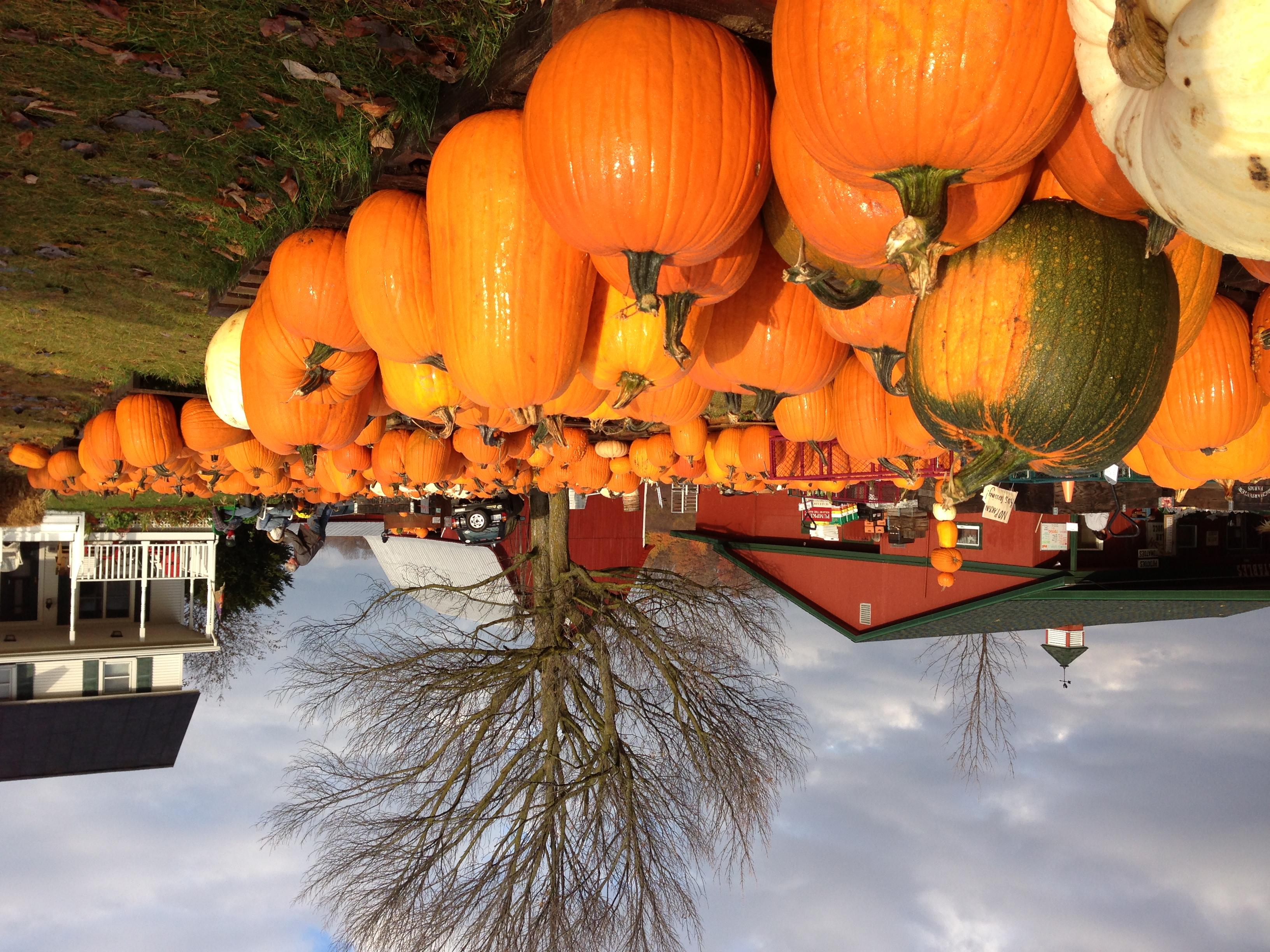 Pumpkins and farm house