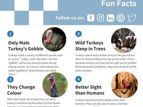 Fun Facts: Turkeys