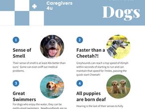 Fun Facts: Dogs