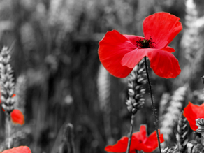 Field of Painted Poppies