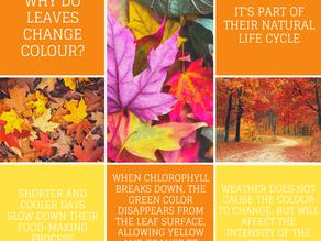 Fun Facts: Autumn Leaves