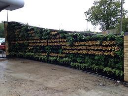 Living wall, green, wall, vertical gardening