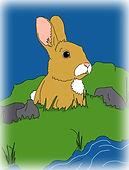 13 - bunnyface.jpg