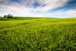 countryside-field-sunny-day-countryside.