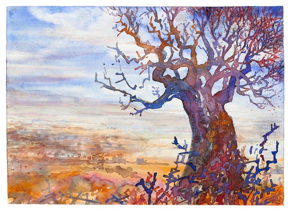 Baobab am Steppenrand