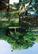 AIO主催「サウンドスケープ沖縄」開催のお知らせ