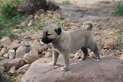Lejness The Land of Kangal