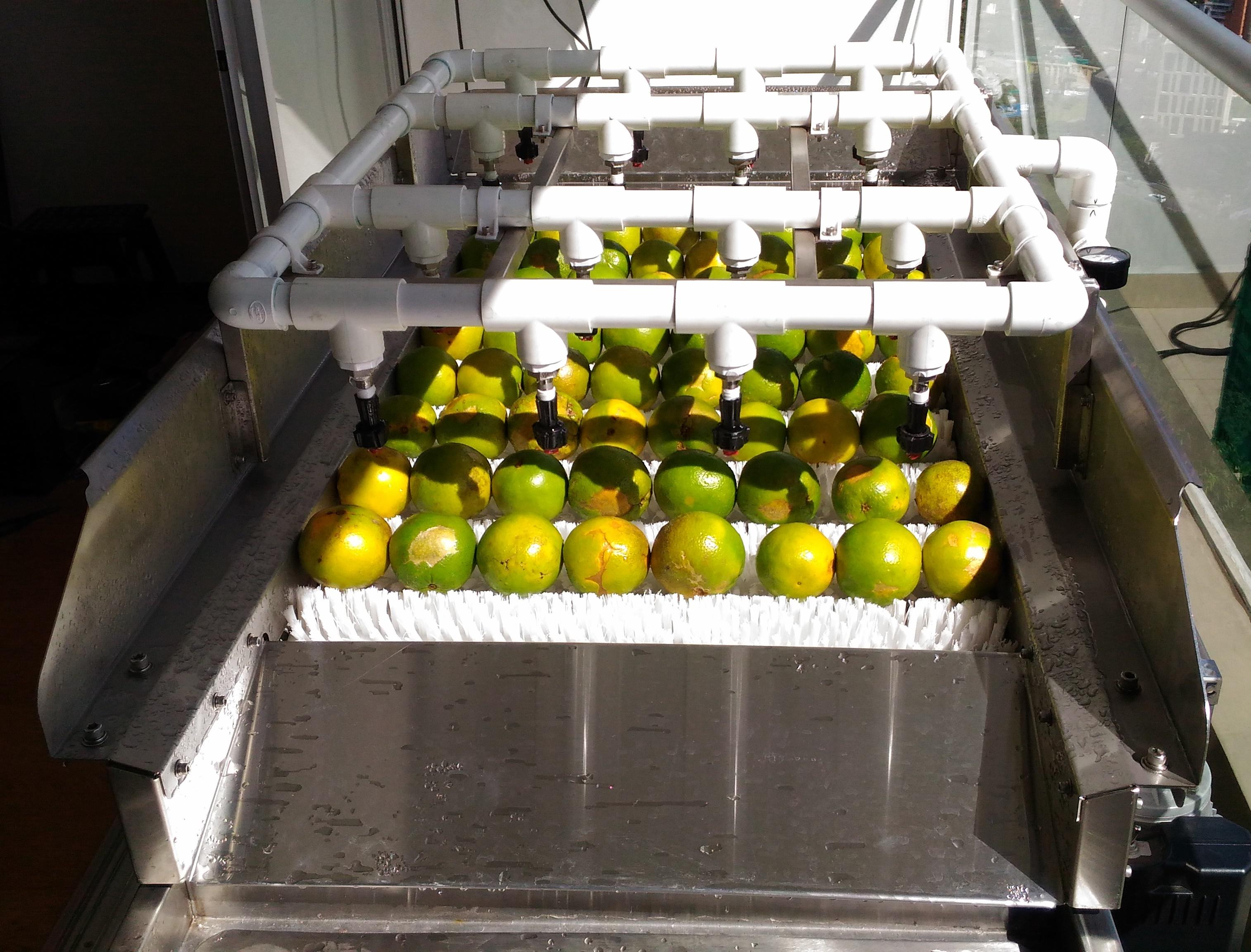 Máquina lavadora de naranjas