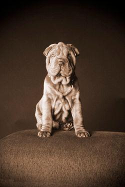 Fine Art Pet Portraiture