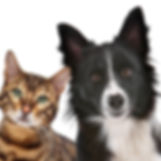 Bigstock-_21579568_-_Dog_And_Cat_edited.