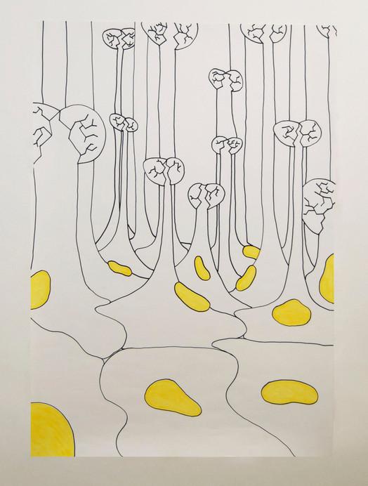 Eggstokker (ovaries)