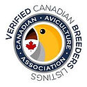 Canadian Avi Ass logo.jpeg
