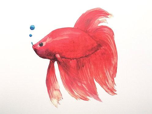 Pez Rojo- Reproduciones-NP