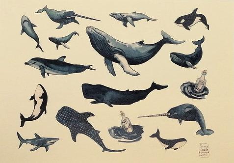 Ballenas - Reproducción