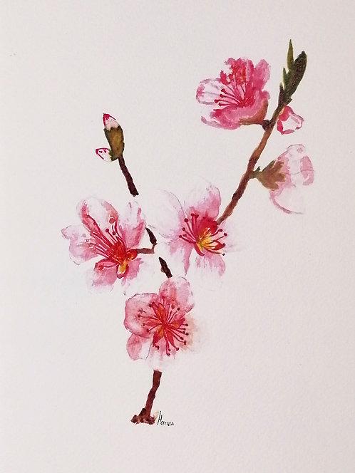 Botanica en Rosa-Reproduccion