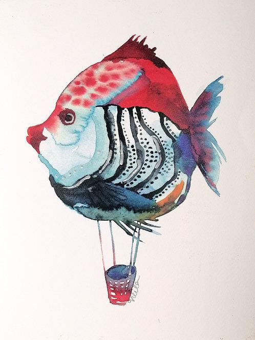 Bancode peces Naranja-Reproducciones- NP