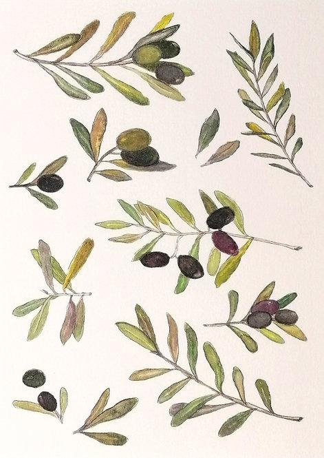 Olivo- Reproducción