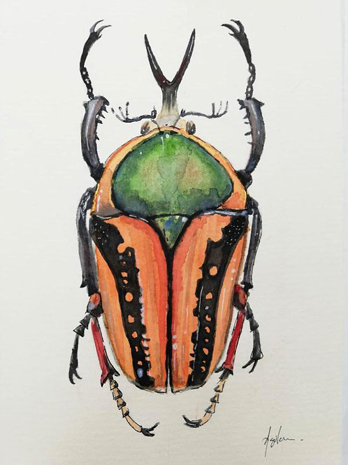 Escarabajo - Obra Original acuarela