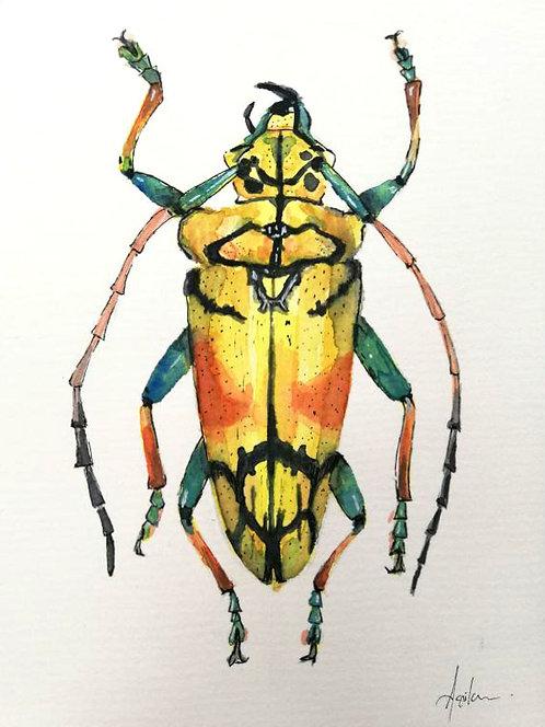 Escarabajo 2- Obra Original Acuarela