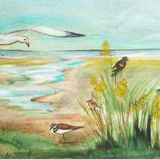 Birds of Hampton Beach