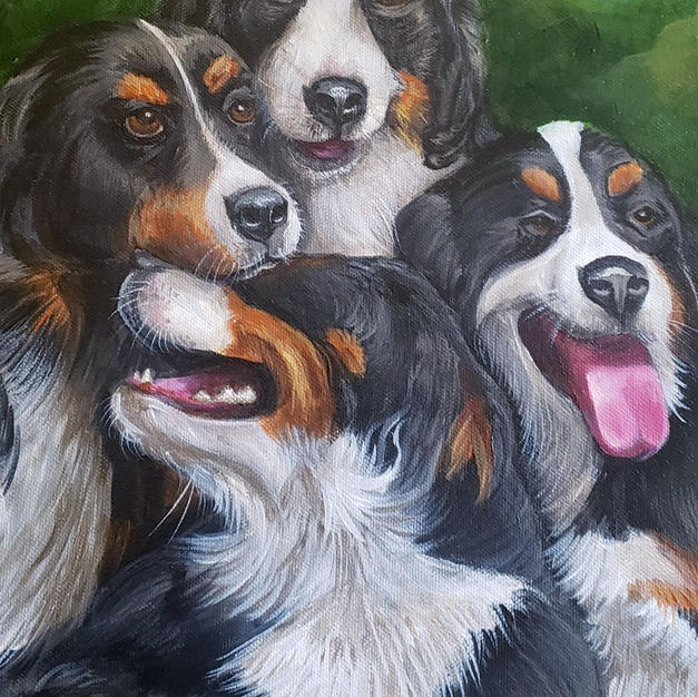 Bernese Mountain Dog Pet Portrait Close-
