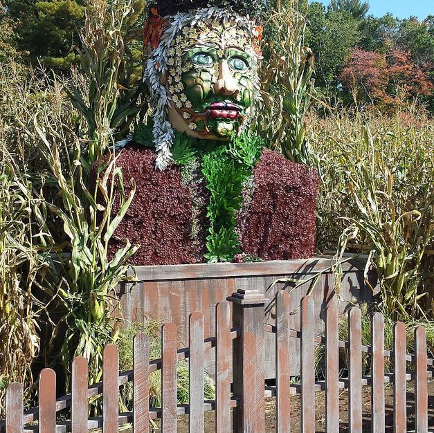 Corn Maze Garden Spirit