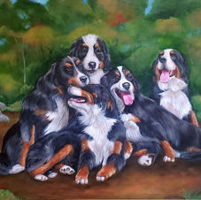 Bernese Mountain Dog Family