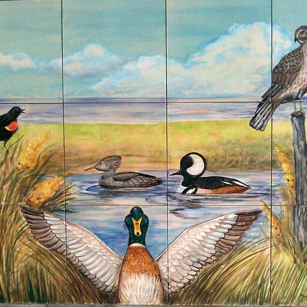 Birds of Hampton NH, Close-up