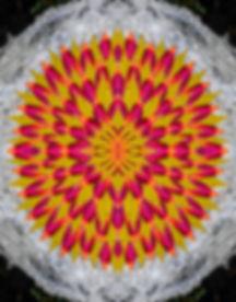 Leaves FINAL 4x5.jpg