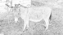 Donny the Donkey