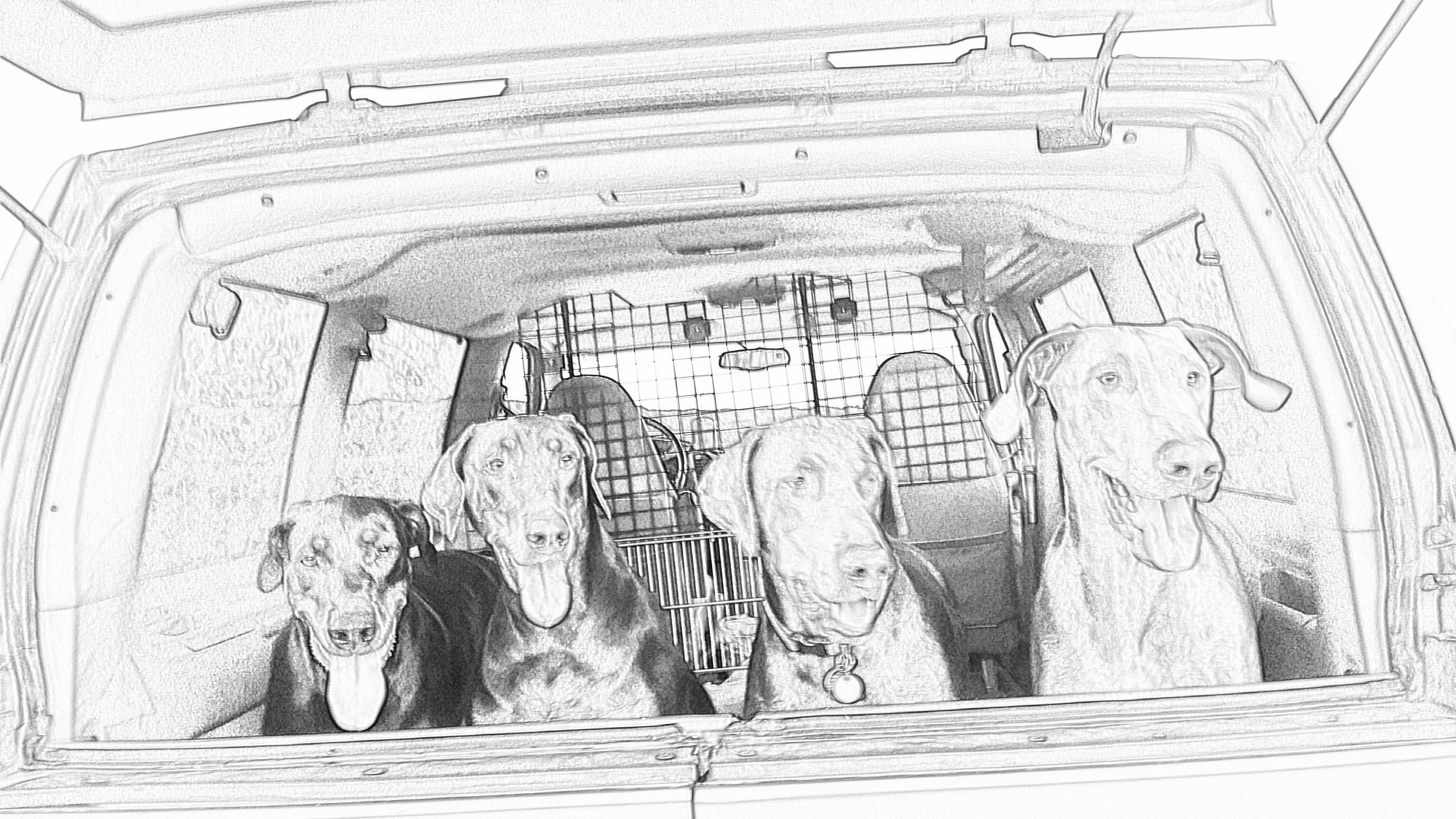 The Dobbie Gang
